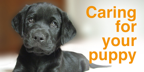 Caring for your puppy