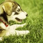 canine prostate awareness