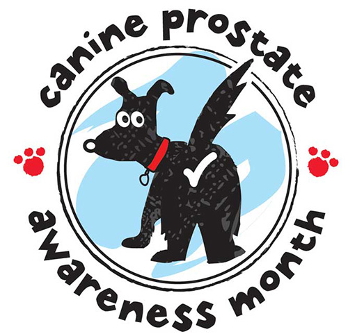 canine-prostate-awareness-month