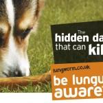 lungworm vet advice