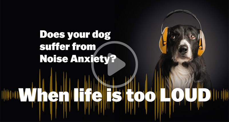13 common signs of noise aversion in dogs