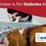 pet-diabetes-month