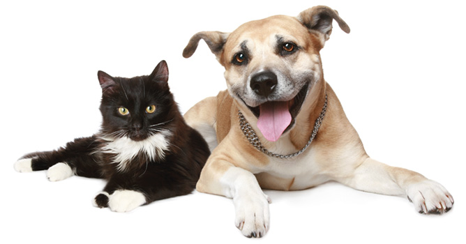 cat and dog microchipped stourbridge
