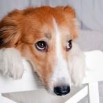 guilty-dog-behaviour-training