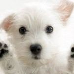 introduce-new-dog-into-your-family