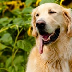 keep-pets-safe-this-summer