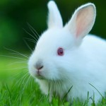 Preventing Fly Strike in Rabbits