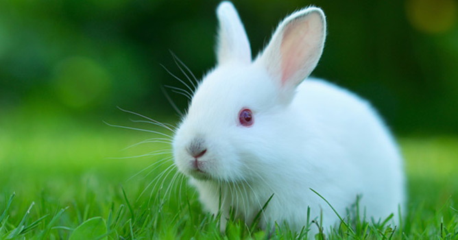 Preventing Fly Strike in Rabbits