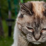 Spotting the Signs of Pain or illness In Your Cat