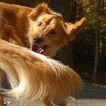 stress behaviour in dogs