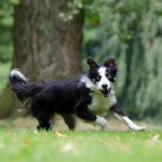 Euthanasia - saying goodbye to your pet