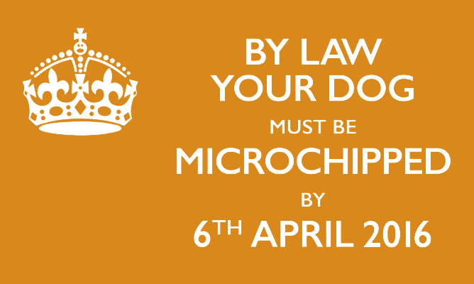 microchip-your-dog-by-law