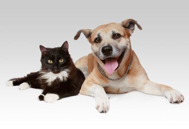 Pet Health Club - Powis Vets Stourbridge