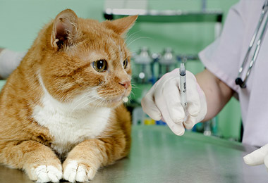 Vaccinate Your Pets - Powis Vets Stourbridge