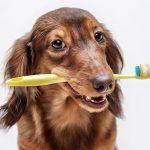 Dental Hygiene for Pets