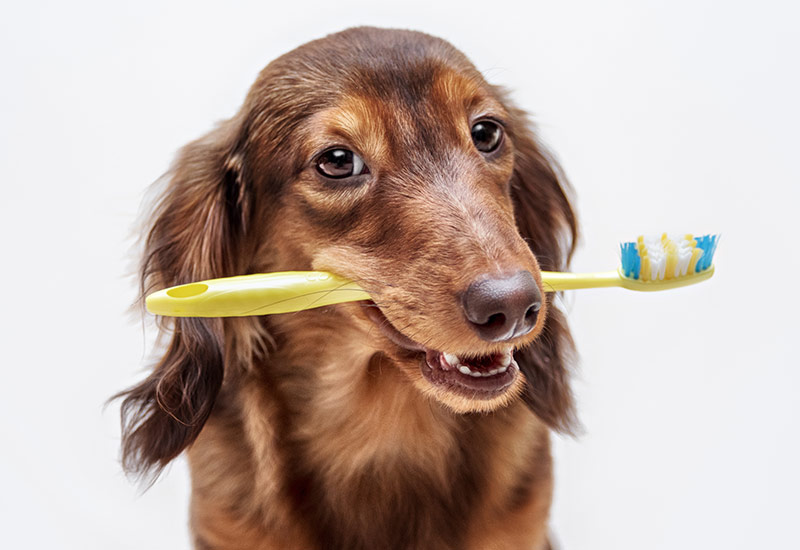Dental Hygiene for Pets